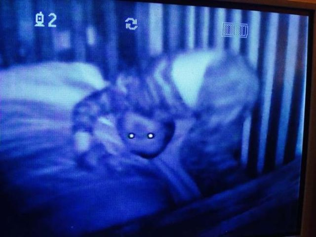 baby_monitor_footage_that_will_give_you_the_creeps_640_09