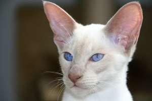 兄ちゃんのご飯を盗み食いしようとしたら兄猫がエリザベスカラーをつけていてご飯を盗めないとわかった瞬間のうちの猫の顔