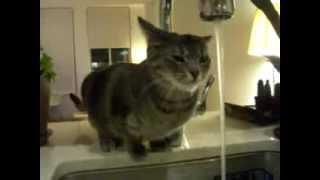 実家の猫が明らかにおかしいwww