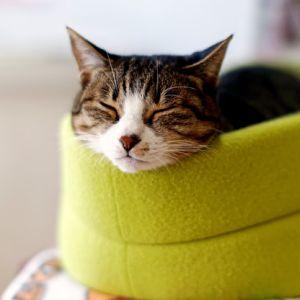 料理によって異なるリアクションをとる猫の日常
