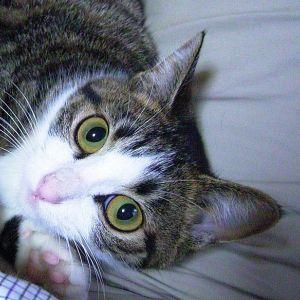 おやつの猫缶あける音がした瞬間の表情! ほか
