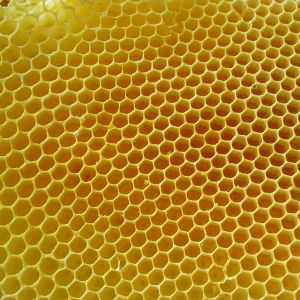 ちょwwwヘッドライトに蜂の巣作っとるwww助けてwww