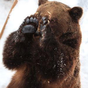 [悲報]日本ハムベンチ、熊代の「熊」が書けなかった
