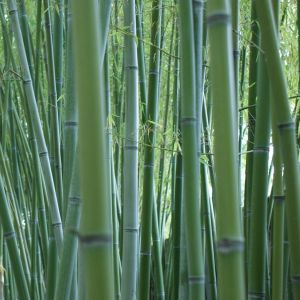 竹を切ったらすっごくフレンドリーな「竹の精」が出てきたwww