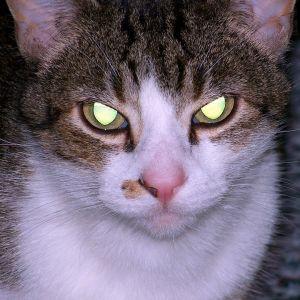 何となく貞子みたいなことになってる猫が撮れたwwww