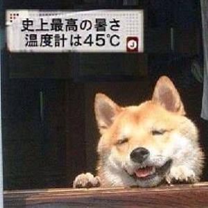 暑さにより犬がとろける現象が発生しています