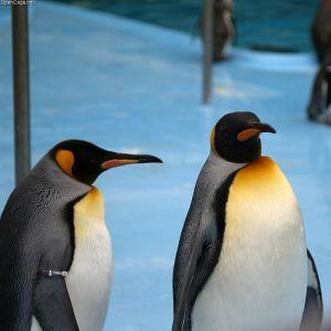 「やる気のないペンギンショー」でお馴染み、おたる水族館公式の説明文の開き直りっぷりw