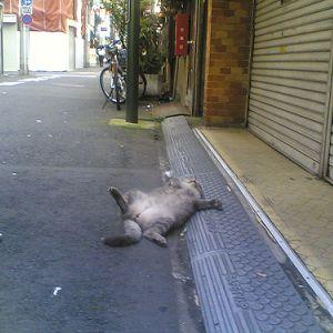 猫ってこんな伸びんの!?