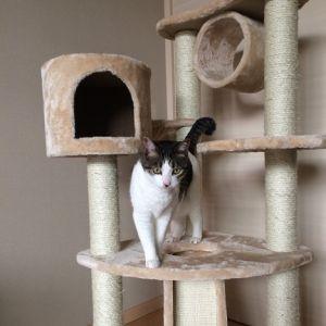 キャットタワーを買って猫が遊んでくれる事を期待した結果w