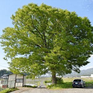 この木、リラックスしすぎだろwwwwwwwww