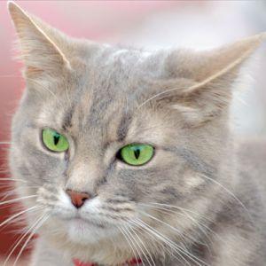 母親から送られてきたネコ写真がジャケ写みたいで草