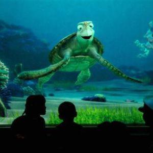 沖縄の水族館にリアル「タートルトーク」があったw