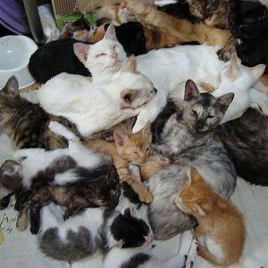 【キュン死】はじめてふかふかのお布団に入った猫の反応