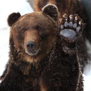 この『熊出没注意』の看板、説得力ありすぎwww