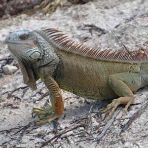 近所の爬虫類專門ペットショップがガチギレしてた。