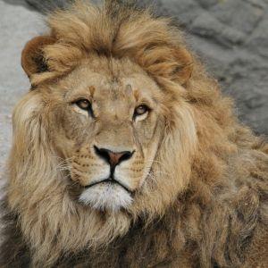 陶製のライオンの口が欠けてしまったのでコンクリで修復した結果wwww