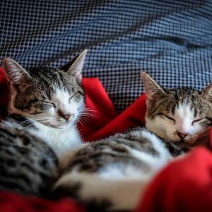 同じ室内なのに寝方の差がありすぎwww
