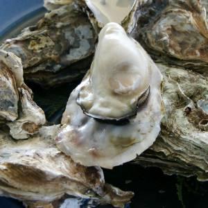 このスーパーで売ってる牡蠣の商品名wwwww