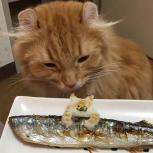 隣家から秋刀魚の匂いがしてきたときのうちの猫w