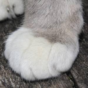 取ったーーーーー😺と思ったら自分の足だった🐾