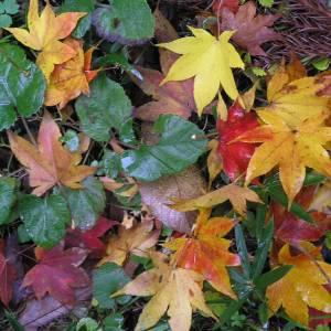 落ち葉のグラデーションで表現した「光る樹」がスゴイ!