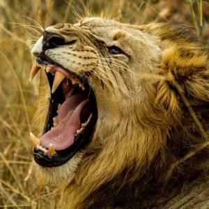 銀座三越のライオンから威厳が失われてるww🦁