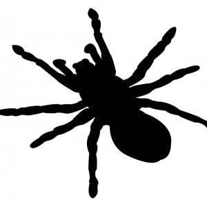ディスプレイに張り付く蜘蛛を追い込んでみたww