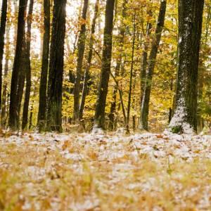 秋が冬に追い越されてた。