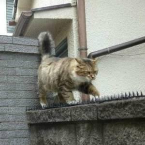 猫よけを全く気にしない日本のネコさん達wwwww