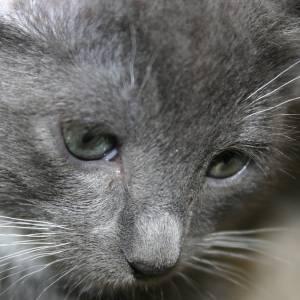 愛猫が、謎の表情でこちらを見てくる😹