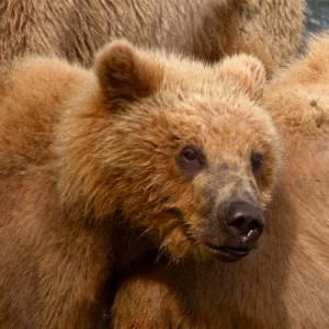 ドイツの狩人が考案した熊に食べられないスーツにワラタw