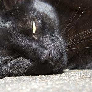猫の愛情表現の一つに、ゆっくりの瞬きがあります😽