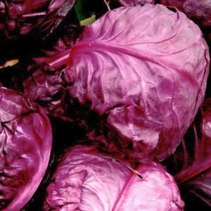 鍋に「紫白菜」を入れてみた結果wwwwwwwwwwww
