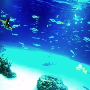 海底の密室サスペンス! どっちが被害者!?