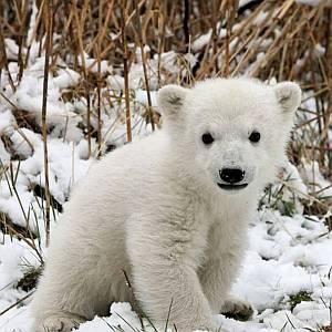 この熊の置物、こんな隠された機能があったとは…!