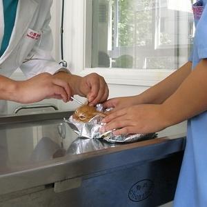 動物病院で犬を検査したら、会計のレシートが雑すぎて笑ろたww