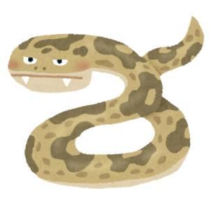 だれが「爬虫類のような冷たい目」なんて言ったんですか!🐍