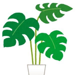 この植物なるものの抽象化に感じられる狂気のような何か。