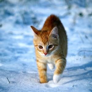 生まれて初めて雪を見た😸