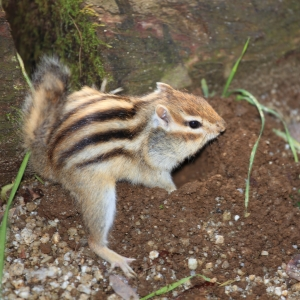 井の頭自然文化園の栗鼠は正義です。