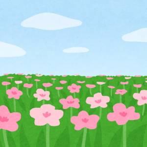 いくらジャニオタつってもそこまでお花畑じゃねえんだよ😤