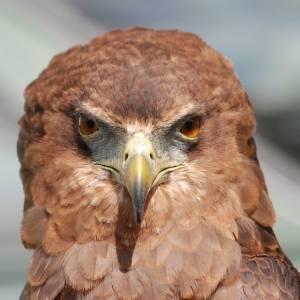荒ぶる鷹のポーズ!