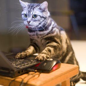 PCで暖をとるのやめて下さい😸