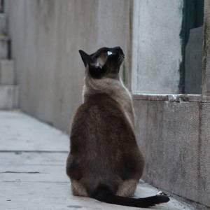 ハチ公の足の間に可愛い猫が…!  ご主人様を待っているのかしら?