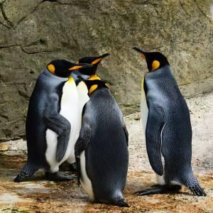 ペンギンで画像検索したら出てきたけどお前はちがうw