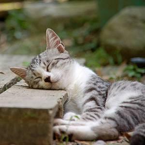 一緒に遊んでたら急にうとうと寝る。猫あるある。