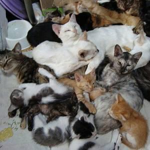 「猫布団」を体験できる島は青島だけです🐱