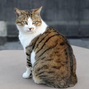 実家の猫が家の中に入れて欲しいときの顔が切実すぎるwwwww