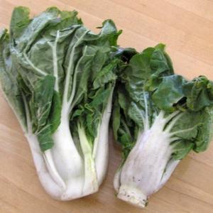 白菜を美味しそうにムシャムシャ食べる3匹の子犬