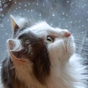 雨の日の小さな幸せ😺